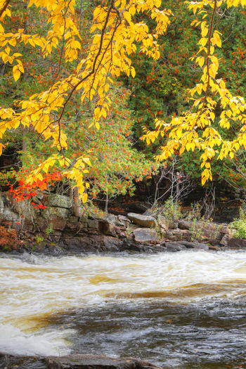 Scenic view of river flowing in forest during autumn