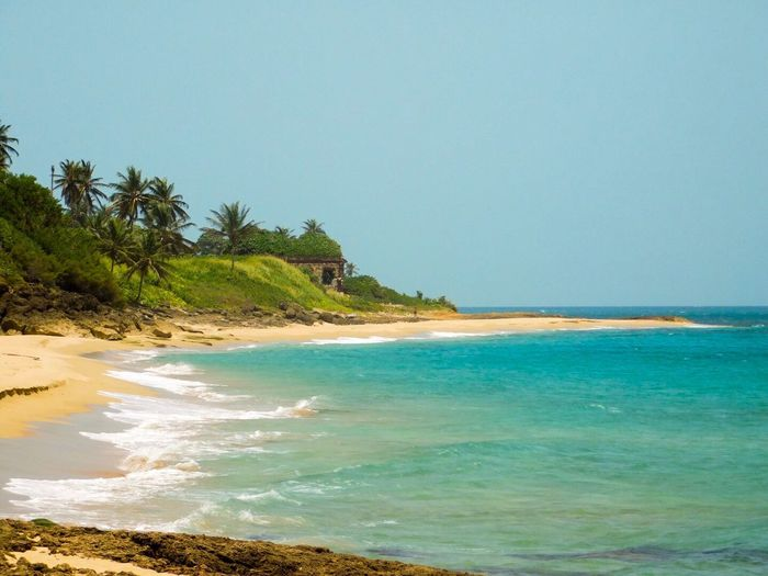 Sea Beach Copy Space Clear Sky Horizon Over Water Scenics Water Nature Beauty In Nature Sand Blue No People Palm Tree Outdoors Tranquil Scene Growth Tree Wave Turquoise Day Las Ruinas Puerto Rico EyeEmNewHere