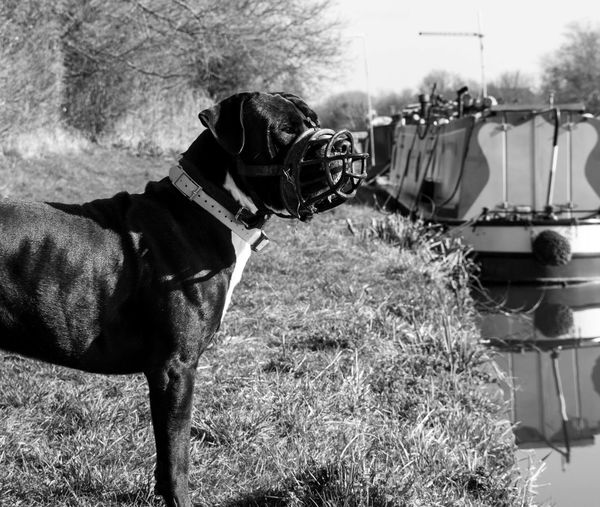 Dogoftheday Dogslife Dogstagram Dog Walking Canal Walks Canals Canal