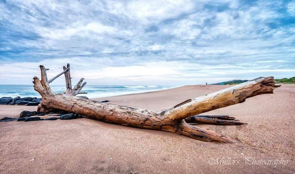 Sea Seaside Seascape Beach Driftwood