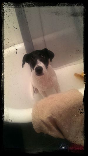 Bath time for Doc!! smelly puppy I Love My Dog