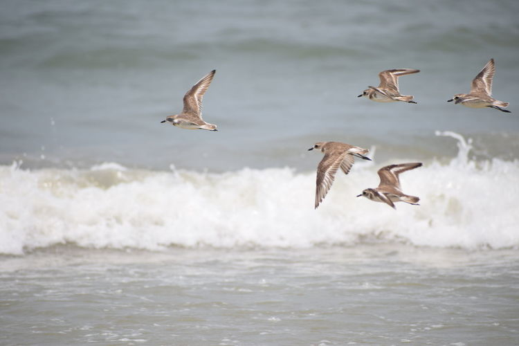 sea ......birds ..... waves..... NIKON D5300 Nikon Photography Nikon Nikonphotography Photography No People Nikond5300 Sea Life Sea Side Day Bird Spread Wings Flying Water Bird Of Prey Sea Mid-air