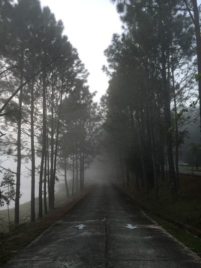 Choose The Way Nature Path In The Mist Pathway Road The Way Forward Tranquil Scene Tranquility