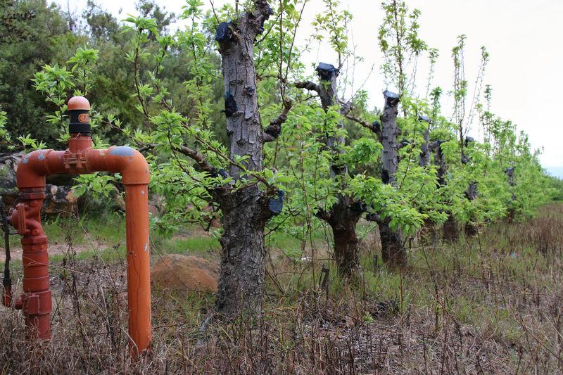 Irrigation Equipment Nature Tree Vines Vineyard, Water Water Pipe Waterpump