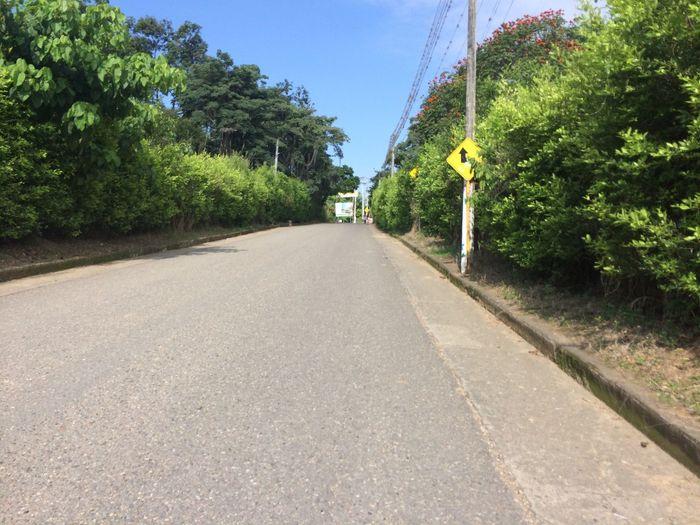 Camino Alegre The Way Forward Plant Direction Tree Transportation Diminishing Perspective Road