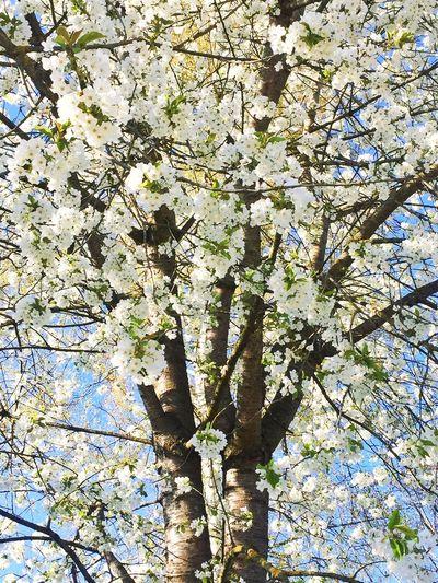 Spring Into Spring