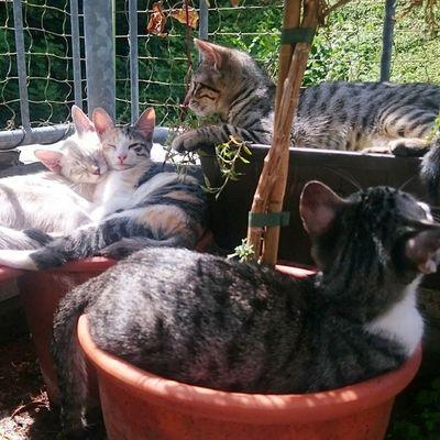 Balkon Nr. 1 getestet und für gut befunden. Blanco_the_cat Echo_the_cat Rayado_the_cat Felicidad_the_cat