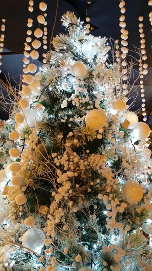 Christmas Tree Eye4photography  EyeEm Best Edits EyeEm Best Shots Beautiful Christmas Time Christmas Lights Christmas Decorations Christmastime Christmastree Christmaslights Merry Christmas Christmas Is Coming