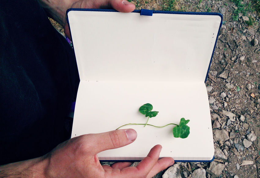 Man holding a blank notebook with four leaf clovers in it. 4 Blank Pages Clover Concept Copy Space Find Fortunate  Four Four Leaf Clover Four‐leaf Clover Grass Herbarium Holding Human Hand Leaf Luck Lucky Man Nature Notebook Pick Rare Success Symbol Symbolism