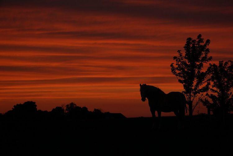 Summersunset Stunning View EyeEm Nature Lover EyeEmBestPics Horses Beautiful Nature Beautiful Fields