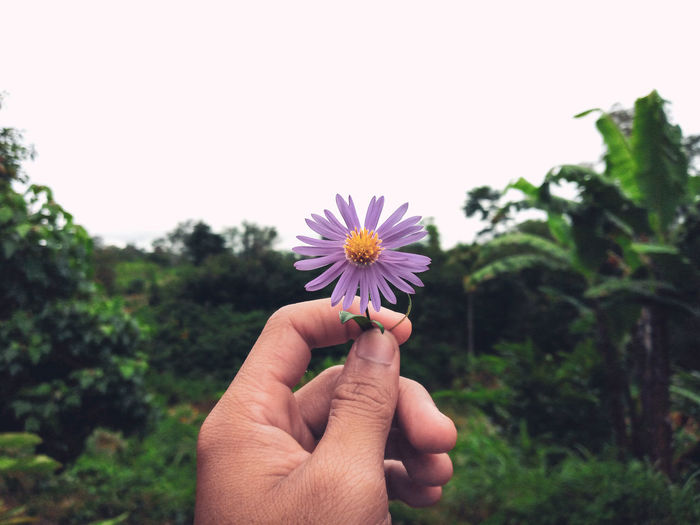Cropped hand holding purple flowering plant