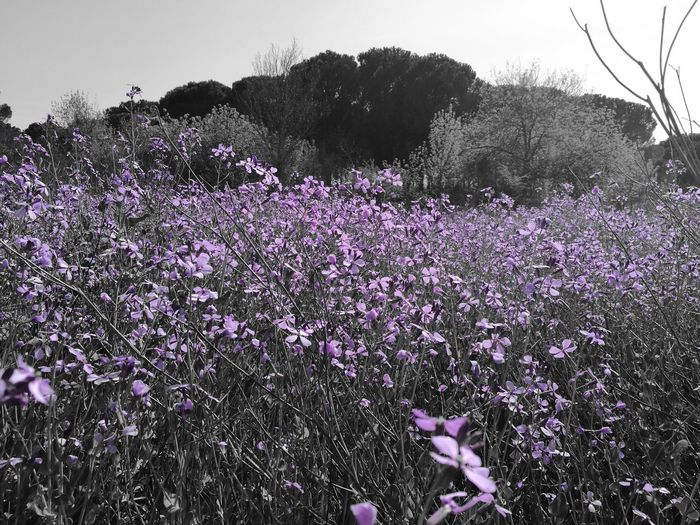 Flower Purple Nature No People Fragility Plant Beauty In Nature
