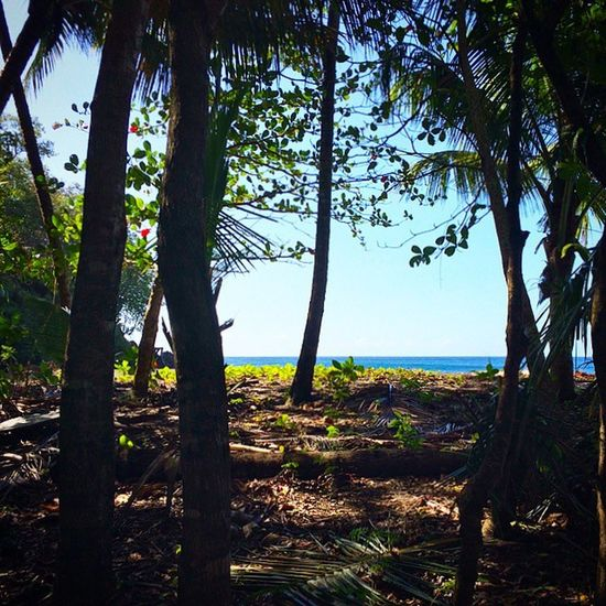 Ilivewhereyouvacation Islandlife Ig_global_life Ig_serenity Grenada Caribbean_beautiful_landscapes Westindies_landscape Wonderful_places Beach Bushments EarthCaptures Exploringtheglobe