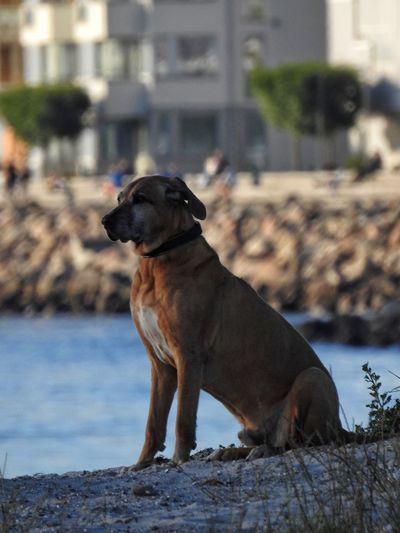 Old Proud Dog Sitting Check This Out Hello World Animal Pet Solitude Guarding Blury Background Cute