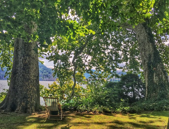 Beauty In Nature Day Garden Green Color Lake Landscape Nature Park Relaxing Scenics Sunchair Tree Waterfront