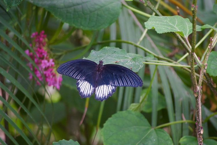 Animal Themes Animals In The Wild Beauty In Nature Butterfly - Insect Close-up Day Fragility Freshness Growth Insect Leaf Nature No People One Animal Outdoors Plant Purple