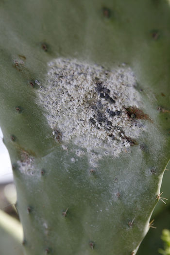 Close-up of fruit on cactus