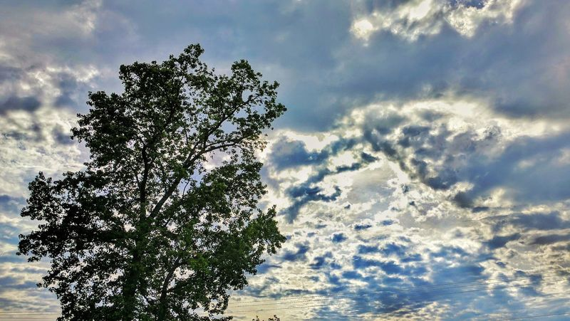 Cloud - Sky Tree Nature No People Day Beauty In Nature Sky Growth Outdoors Sunlight Close-up Clouds Chattanooga Sunlight Sunset Landscape Photography Countryside Landscape Heavens Mountain