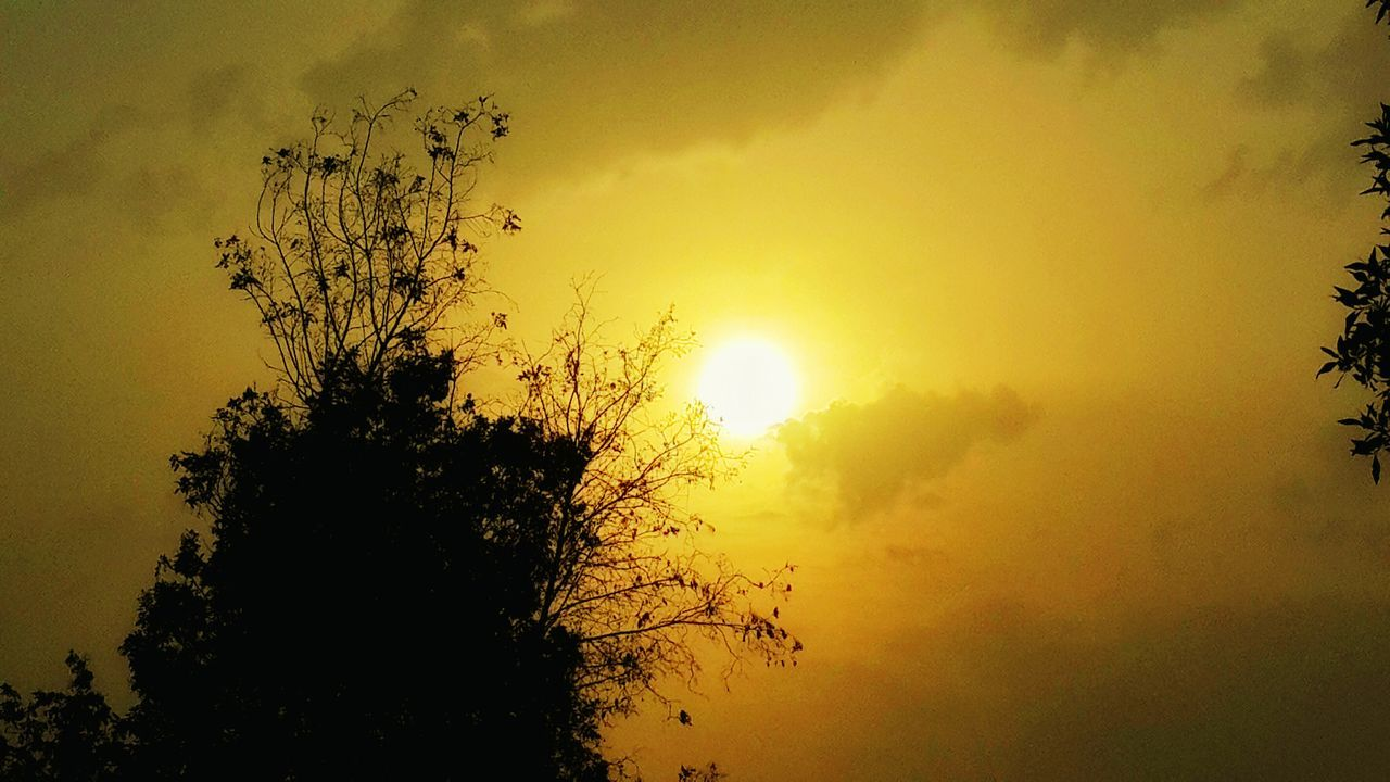 tree, sunset, nature, beauty in nature, sky, silhouette, tranquility, growth, tranquil scene, scenics, no people, sun, yellow, outdoors, landscape, day