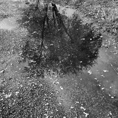Després de la pluja Black&white Trees