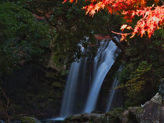 Sunlight that hit only the autumn leaves🍁 Simple Quiet Love Japan Shizuoka M.ZUIKO DIGITAL Lumix G9 Scenics - Nature Day EyeEm Nature Lover EyeEmNewHere Sunlight Scenics Autumn Forest Tree Long Exposure Tranquil Scene Tranquility Beauty In Nature Nature No People Outdoors Waterfall Water