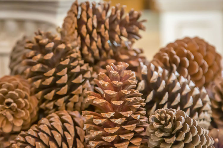 A pile of pine cones, with a shallow depth of field Close-up Focus On Foreground No People Freshness Indoors  Large Group Of Objects Selective Focus Food Still Life Abundance Retail  Brown Pattern Nature Beauty In Nature Natural Pattern Heap Pine Cone Cones Festive Christmas