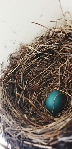 Nest Egg Robin
