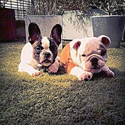 Dogs Earth Pumba Pumbi BillKaulitz  Likeboxsaratov