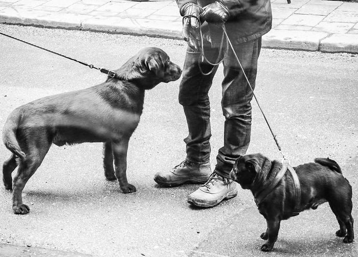 Low section of man standing with dogs