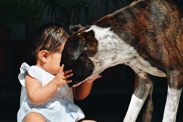 Close-Up Of Baby Girl Playing With Boxer Dog