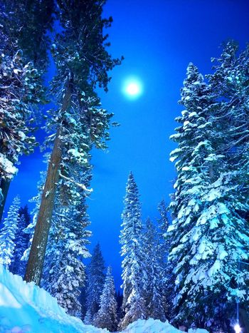 Moon light on the snow covered trees. #snow #winter #moonlight Low Angle View Tree Blue Nature Sky Beauty In Nature Winter