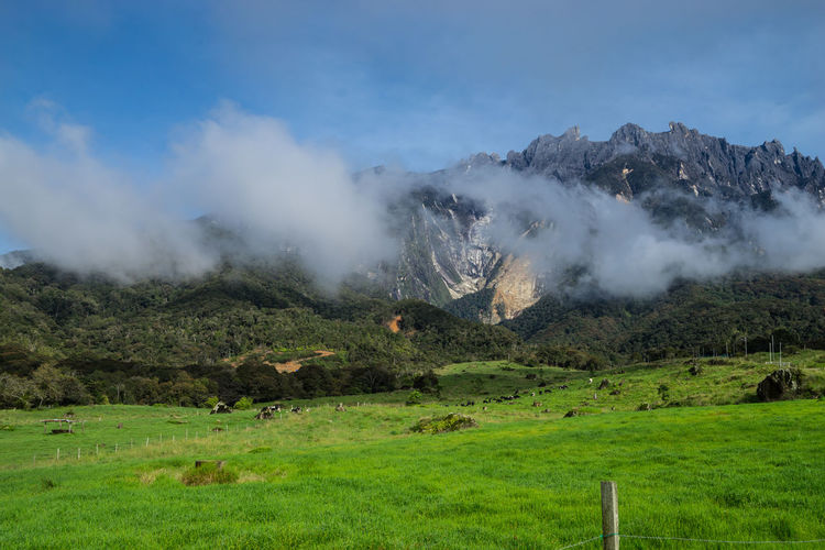 View of dairy farm and Mount Kinabalu as background in Kundasang village, Sabah, Malaysia Beauty In Nature Dairy Farm Day Extreme Weather Kinabalu National Park Landscape Lush - Description Mesilau Trail Nature No People Outdoors Scenics