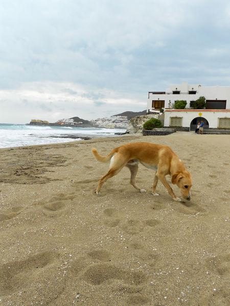 Full Length Animal Animal Themes Beach Sand Nature Outdoors Dog Dog On The Beach Dog Photography