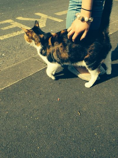 Met this one on the way out with the dog today