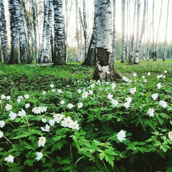 Spring Flowers Nature Naturelovers Beautiful Nature Vaidava Freedom