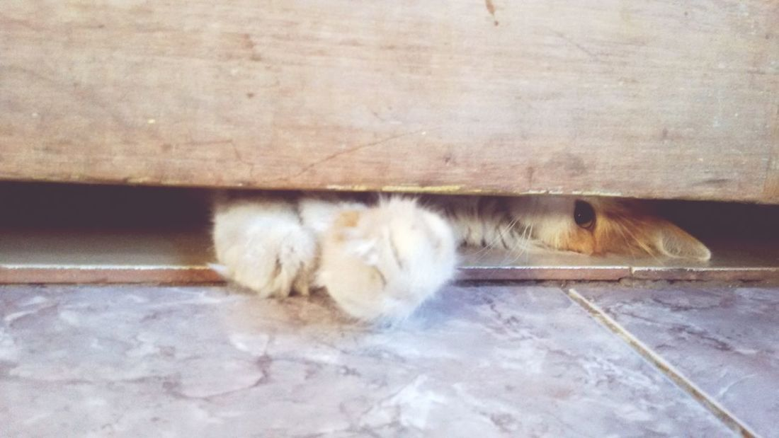 No puedo no amarlo ♡ Kitten Kittycat Playing Door Paws Purrrr Lovehimsomuch