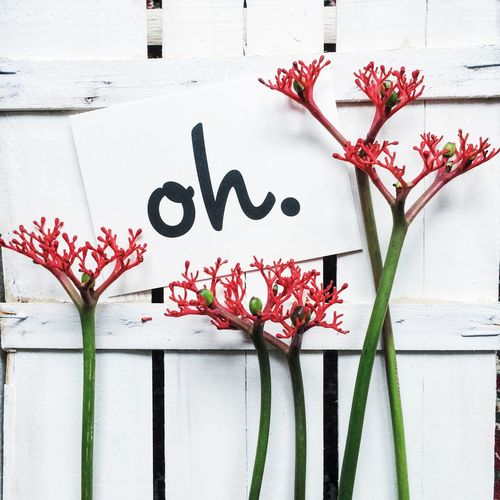 Flowers blooming by quotes against wooden fence