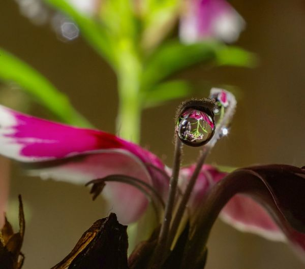 Drop Macro Nature Photography Malephotographerofthemonth Sony A68 Eyeem Market Macro Photography Macro_collection Purnendu Clicks India