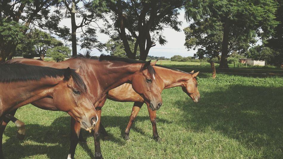 • Beautiful Creatures • Horses My Beautiful Babies My Life In Love Horse Riding Beautiful Horses