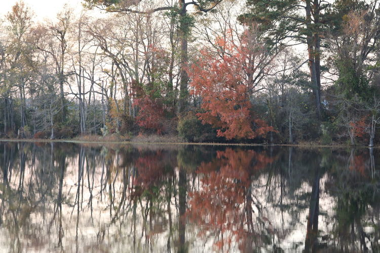 Thanksgiving at Home Tree Plant Tranquility Nature Tranquil Scene Beauty In Nature Water Autumn Forest Scenics - Nature No People Change Day Lake Outdoors Countrylivingforever