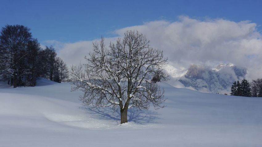 Snow Cold Temperature Winter Nature Weather Tree Sky Tranquility Beauty In Nature Tranquil Scene Landscape Outdoors No People Day Scenics Covering Mountain Bare Tree Lone Switzerland