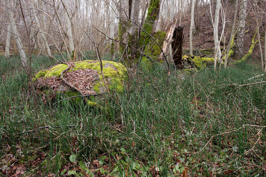 a small river in the spring, untouched nature, green moss on fallen trees Beauty In Nature Branch Close-up Day Forest Grass Green Moss Roc Growth Lush - Description Nature No People Outdoors Tranquil Scene Tranquility Tree Tree Trunk WoodLand EyeEmNewHere