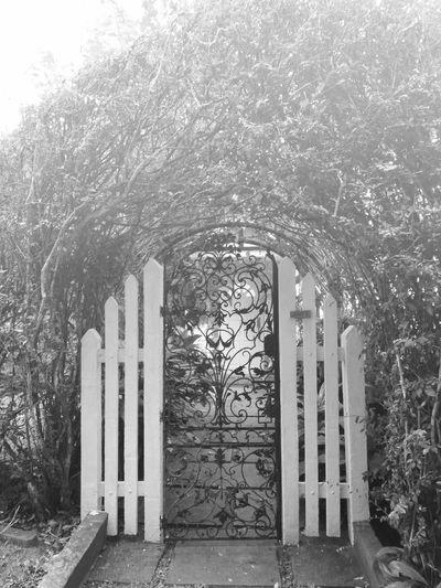 Penang Serene Garden Vintage