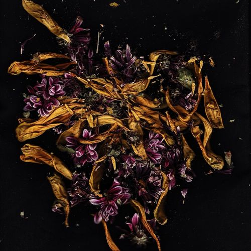 Dried Flowers On Black Background