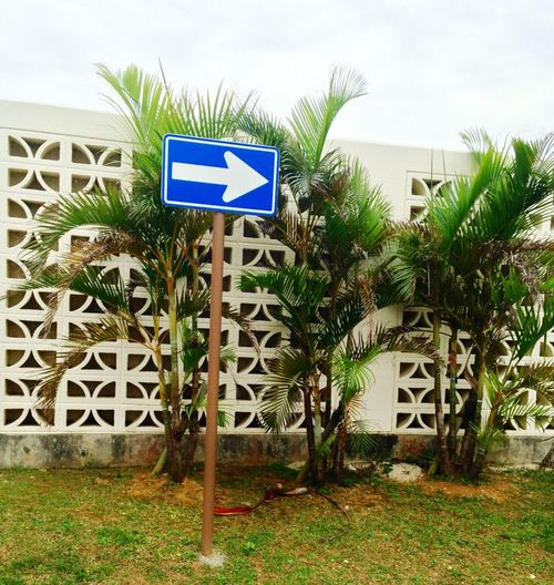 This Way! Palm Trees Marine Corps Base Camp Courtney OKINAWA, JAPAN