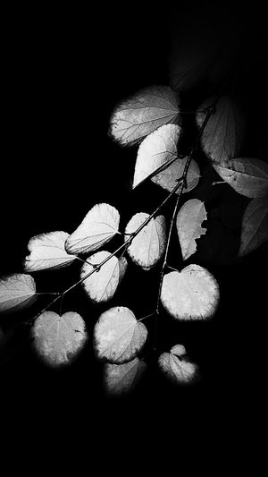 Black And White Nature Leaves🌿 Sheets🍃