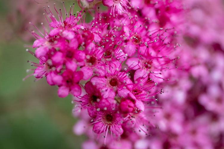 Beauty In Nature Close-up Day Flower Fragility Growth Macro Nature No People Outdoors Pink Color Plant Purple Selective Focus