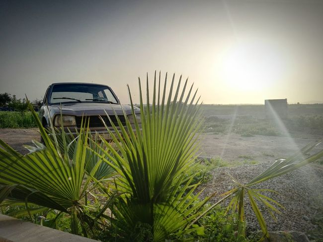 Palm Tree Nature Growth Sunlight Tranquility Vacations Sky Outdoors Day No People Passion Morocco Water Life Tree Summer Vibes Rural Scene Agriculture Landscape Friends Summerfeelings Nature Frenshmusclees Peugeot504 EyeEmNewHere