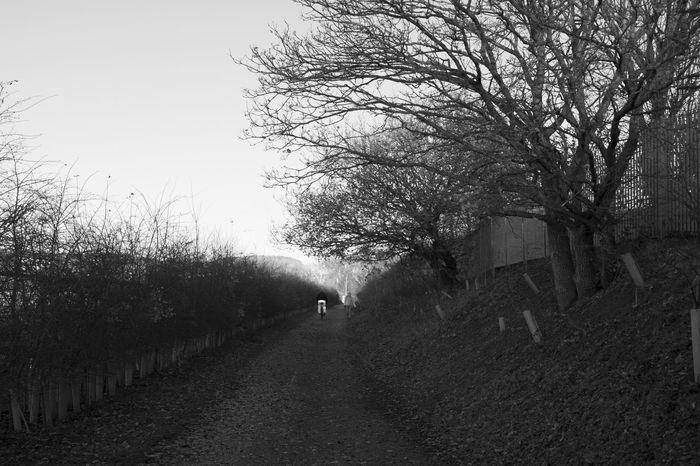 Dreary Walk EyeEm Best Shots EyeEmNewHere EyeEm Nature Lover Blackandwhite Black And White Tree Nature Outdoors Day