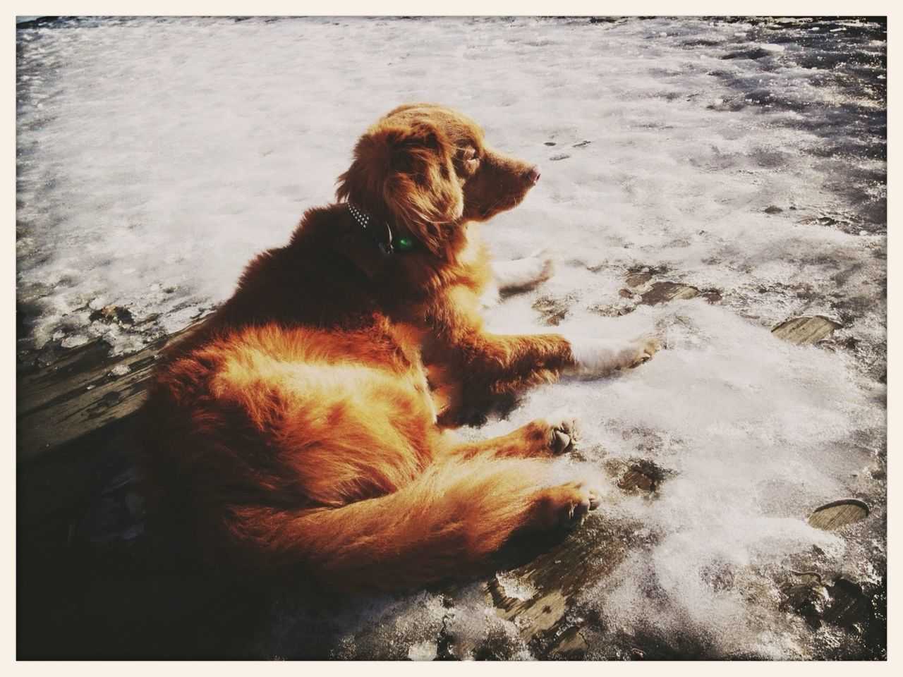 dog, pets, one animal, animal themes, domestic animals, no people, outdoors, mammal, day, beach, sitting, nature, water, full length